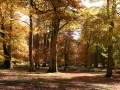 general-autumn-trees-nfdc