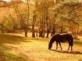 general-pony-2-nfdc