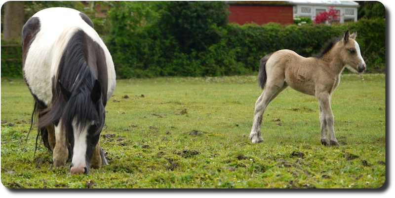 The first foal I saw in 2014