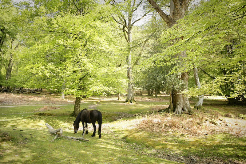 general-pony-landscape-nfdc
