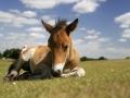 general-pony-nfdc