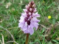 Wild orchid somewhere in Minstead